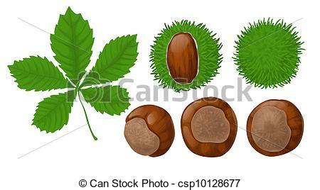 clipart castagne illustrazioni vettoriali di castagne foglia castagne e