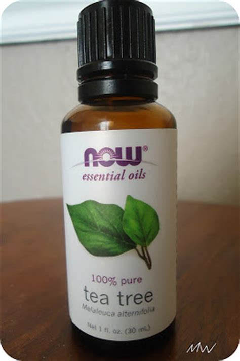 tea tree oil for bed bugs life on purpose essential oils how i use them