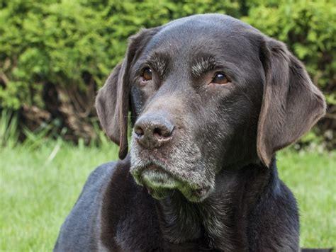 wann wird ein hund eingeschläfert ab wann gilt ein hund als alt