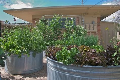 stock tank vegetable gardening stock tank raised beds garden