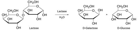 diagram of lactose and lactase reaction opinions on product biology