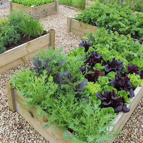 vegetable bed raised bed vegetable gardening