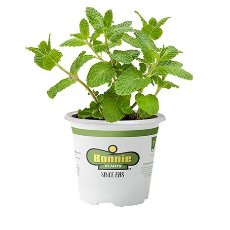 cocktail herb garden miracle gro