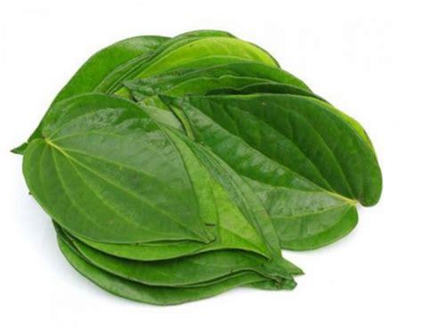Daun Retsleting Gigi Kwalitas A Coklat tanaman herbal di sekitar kita yang banyak manfaatnya