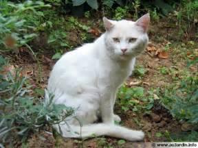 faire fuir les chats de mon jardin trucs astuces recettes