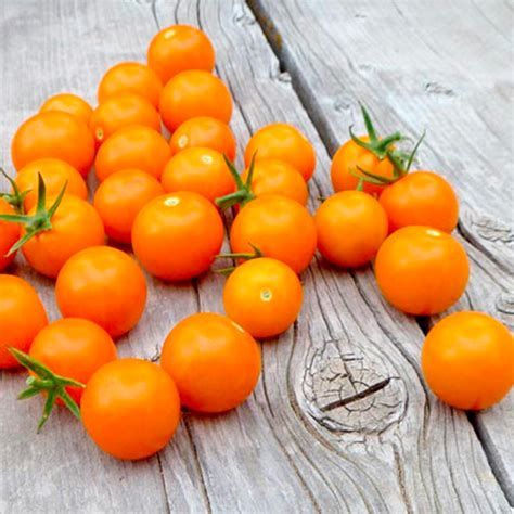 tomato seeds f1 sungold tomato seeds vegetable seeds vegetable seeds gardening