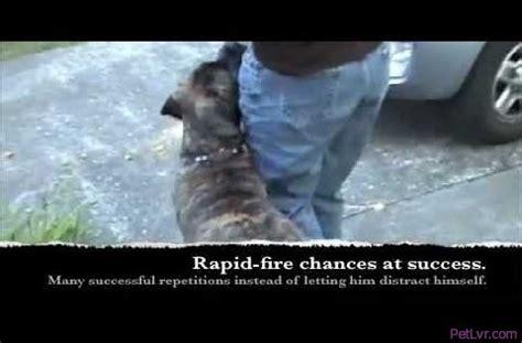 puppy classes seattle how petlvr archives