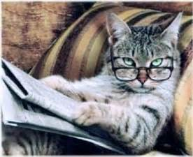 Newspaper Cat Meme - studious cat reading a newspaper wearing reading glasses