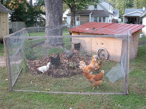 chickens for backyards coop scoop q a with roland kays your