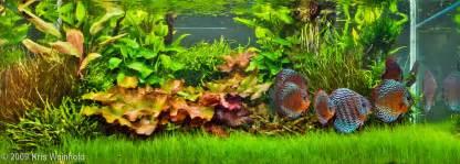 2009 aga aquascaping contest entry 210