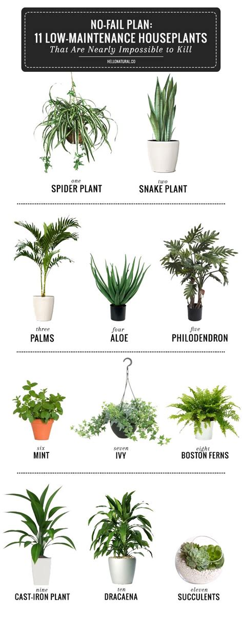 cool small palnts to grow 25 best ideas about house plants on pinterest plants