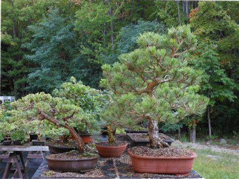 does walmart trees a few of my quot walmart trees