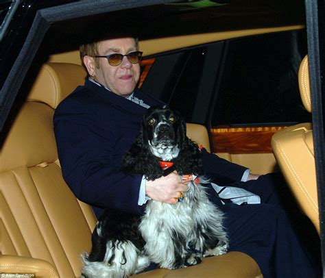 jj s dogs carey s pered and the beckhams chauffeur driven puppy daily