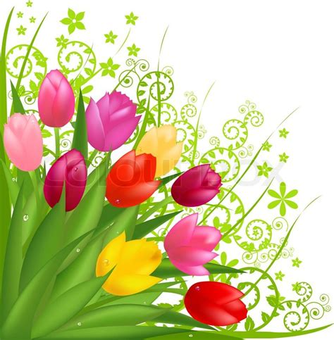 bouquet  spring tulips isolated  white background