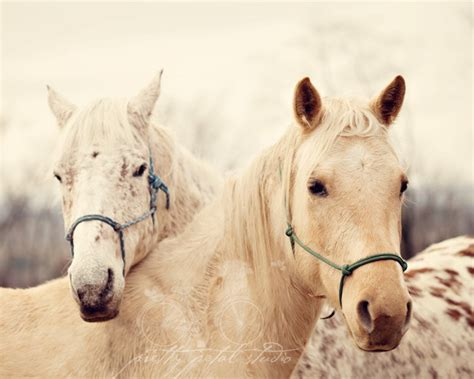 fine art horse photography