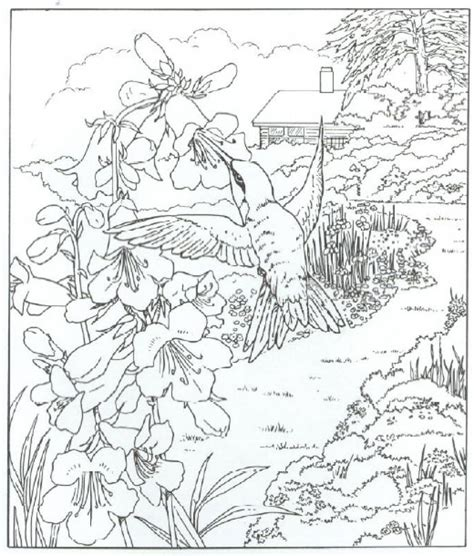 coloring pages for adults hummingbird very detailed realistic hummingbird coloring page for
