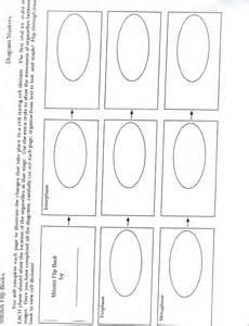 Mitosis flip book answers meiosis flip book template modifikasi