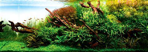 award winning aquascapes aquascape ideas