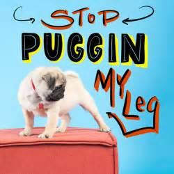 pug puns 13 of the puggin greatest pug puns pet stories pet threads pet threads