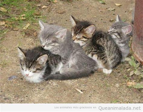 cadenas de perros largas gatos durmiendo graciosos