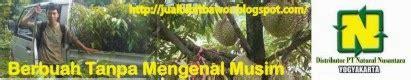 Agen Bibit Durian Bawor agen resmi bibit durian bawor