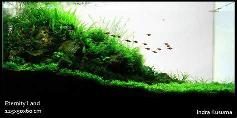 aquatic indonesia aquascaping contest photo contest