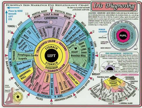 Iridology Detox by 148 Best Iridology Images On