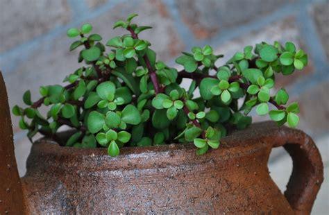succulents plants succulent plants foolproof quot gardening quot amanda brown