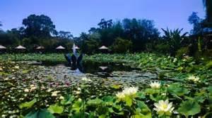Blue Water Lotus Garden Picture Of Blue Lotus Water Garden Yarra Junction