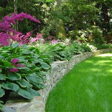 Landscape Design With Hostas Hostas Magenta Astilbe Garden Outdoor Hosta Gardens