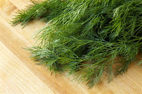 how to preserve fresh dill