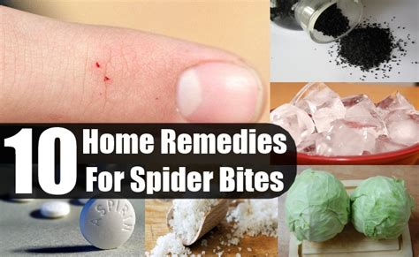 10 home remedies for spider bites diy health remedy