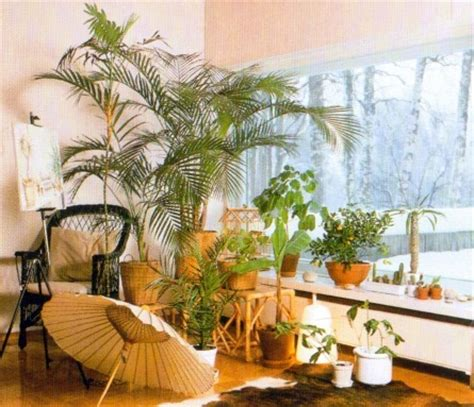 north window plants indoor plants for a south facing window