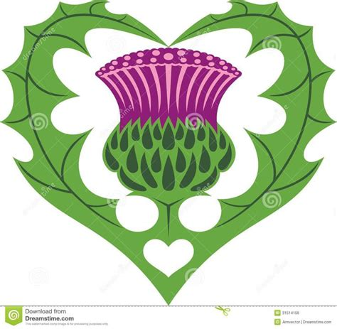 40 best images about scottish thistle on pinterest