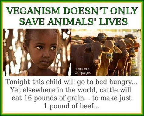 we all a book for compassionate vegans and vegetarians books food for thought cattle children and the o jays