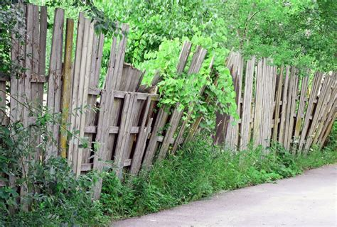 growing fence friendly vines do s and don ts the fence authority blog