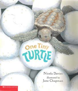 One Tiny Turtle Read And try curiosity global issues research mythology