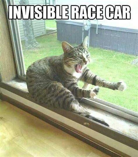 Cat Pic Meme - top 30 funny cat memes quotes words sayings