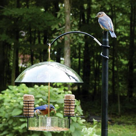 supper dome bird feeder dfohome