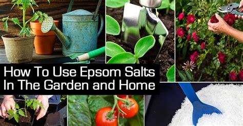 Epsom Salt And Gardening by 9 Benefits Of Using Epsom Salt