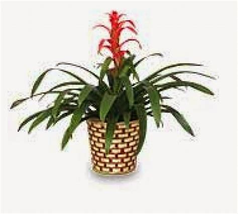 hawaiian house plants tropical house plants images