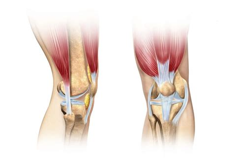 different types of ls five different types of joints livestrong com