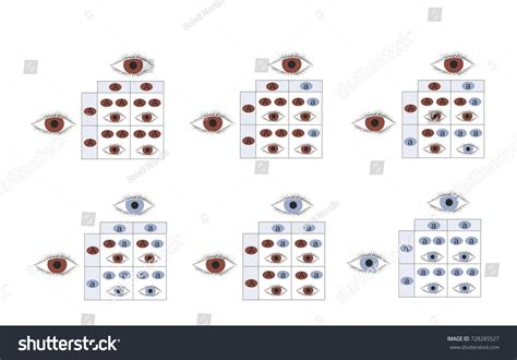 inheritance pattern eye color recessive gene eye color chart images free any chart