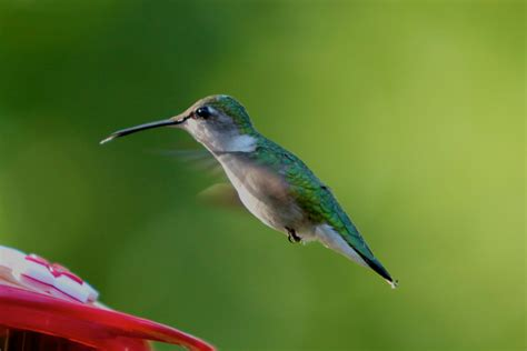 living on earth citizens on the watch for hummingbirds