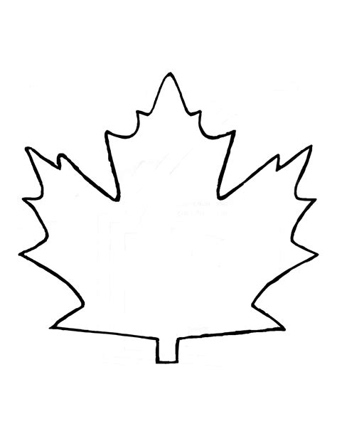 template drawing maple leaf outline clipart coloring europe travel