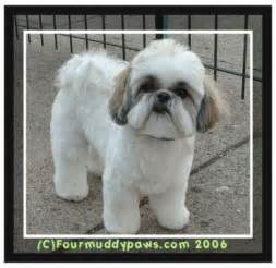 groomers bbs photo album shih tzu teddy cut