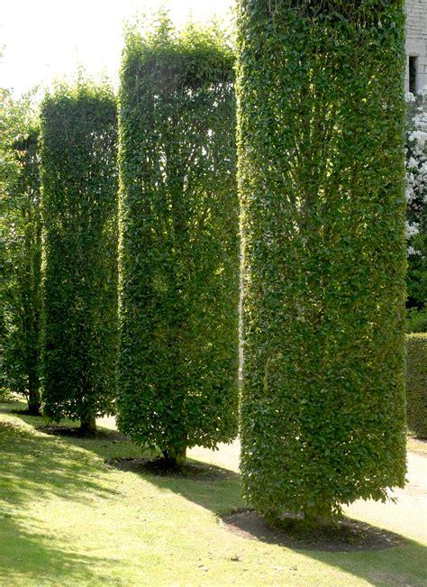 Charmant Plante De Jardin Exterieur #3: e85z14jt3hkockko08gwwg8go-source-11445713.jpg