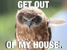 Funny Owl Memes - 17 best ideas about owl meme on pinterest funny owls