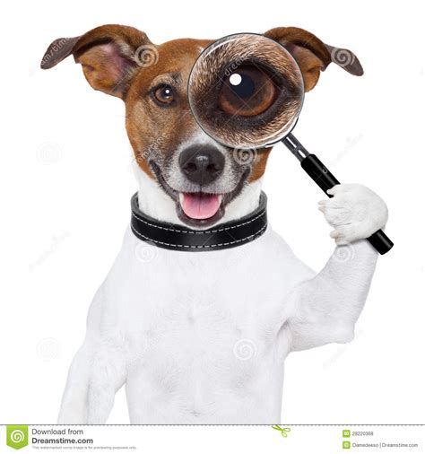free of with dogs with magnifying glass royalty free stock photos image 28220368