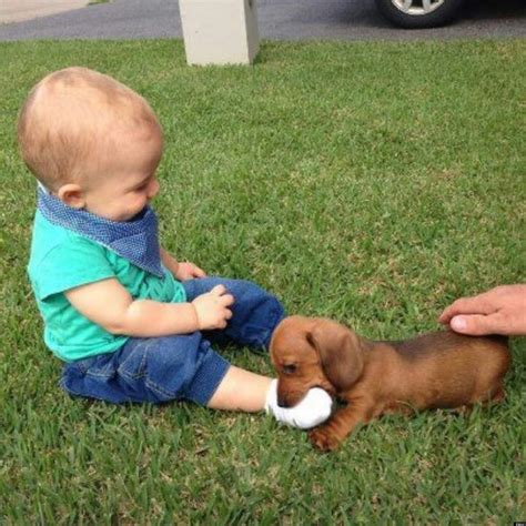 puppies with babies puppy and baby photo may be the best thing you see all day huffpost